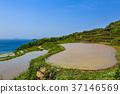 계단식 논, 전원 풍경, 전원 경치 37146569