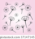 Sweet vector cosmos flowers hand drawn.  37147145