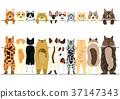 세트, 고양이, 국경 37147343