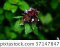 植物 植物学 植物的 37147847