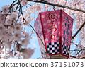 大村神社樱花和灯笼 37151073