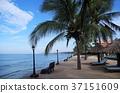 渡假村 度假 海邊 37151609