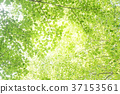 tender, green, verdure 37153561