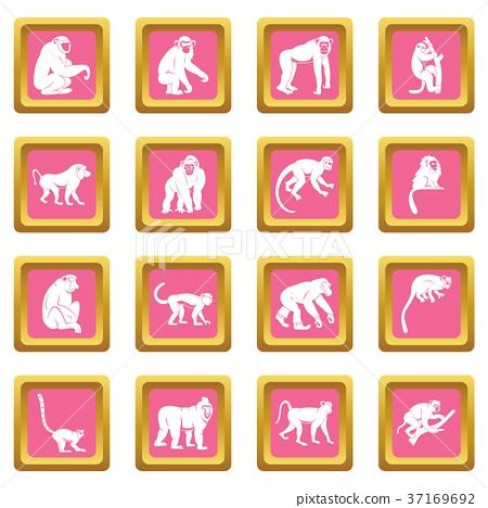 Monkey types icons pink 37169692