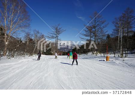 草津國際滑雪場的Shakunage課程(林間課程) 37172848