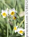 花朵 花 花卉 37180252