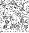 blackberry seamless pattern 37183778