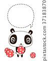 panda, pandas, animal 37183870