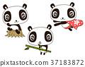 panda, pandas, animal 37183872