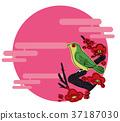 spring, ume, flower 37187030