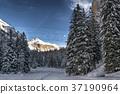 Snowy forest in the mountain, Vallunga - Dolomiti 37190964