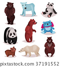 Different species of bears set, wild bears and 37191552