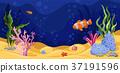 Beautiful underwater scene with seaweed, marine 37191596