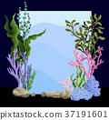 海藻 水下 海 37191601