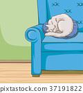animal cat pet 37191822