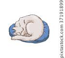 猫 猫咪 动物 37191899