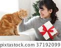 고양이와 선물 37192099