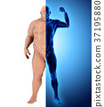 3d illustration before and after transform body. 37195880