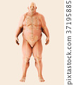 3d illustration Male Fat, healthcare concept. 37195885