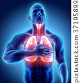 3d illustration of Lungs chest painful healthcare. 37195899