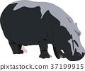 birch, hippopotamus, animal 37199915