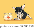 illustration of Pet - cute bulldog, Chihuahua, poodle, Maltese and etc.008 37203259