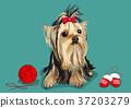 illustration of Pet - cute bulldog, Chihuahua, poodle, Maltese and etc.011 37203279