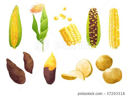 Autumn object illustration - sun flowers, cosmos, chestnut, maple leaf and etc. 008 37203318