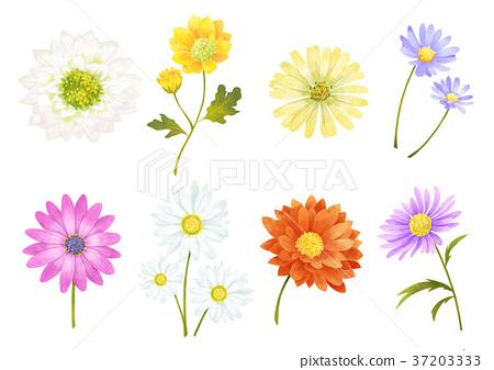 Autumn object illustration - sun flowers, cosmos, chestnut, maple leaf and etc. 005 37203333