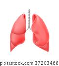 illustration human lung 37203468
