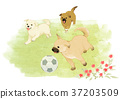 Vector of puppy, a litter of puppies, 2018 005 37203509