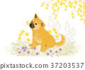 Vector of puppy, a litter of puppies, 2018 003 37203537