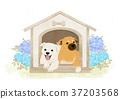 illustration puppy 2018 37203568