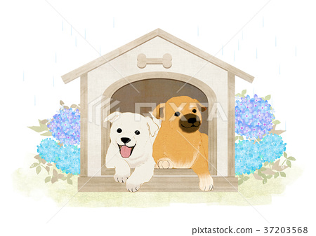 Vector of puppy, a litter of puppies, 2018 007 37203568