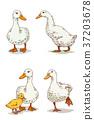 Animals 008 37203678