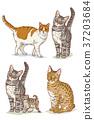 Animals 007 37203684