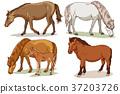 Animals 005 37203726