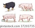 Animals 004 37203735