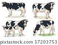 Animals 001 37203753