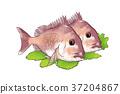 插图 鱼 食物 37204867