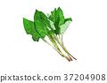 插图 食物 食品 37204908