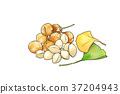 season food 012 37204943