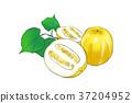 season food 046 37204952