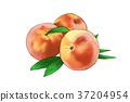 season food 052 37204954