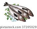 插图 鱼 食物 37205029