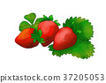 season food 041 37205053