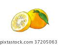 season food 060 37205063
