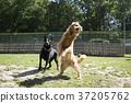 walk with dog 190 37205762