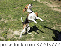 walk with dog 182 37205772