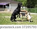 walk with dog 179 37205793